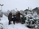 Snow affected Christmas Tree sales