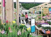 Despite monthly increases, plant sales never recovered early losses